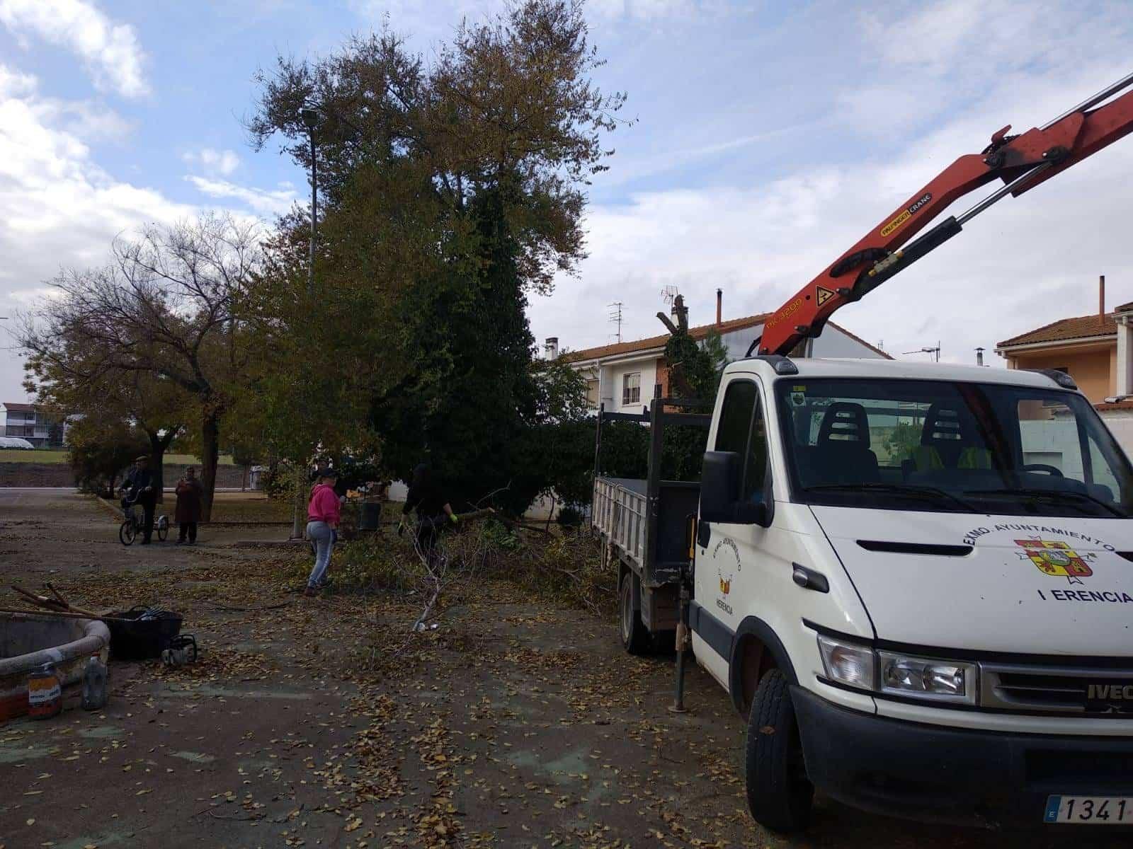 Comienza la campaña de Poda para garantizar la conservación de los árboles 10