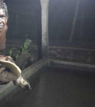 viaje de perle por el mundo elias por Sri Lanka 18 373x420 - Perlé, por avatares del destino, recorriendo la isla de Ceilán.