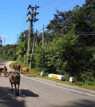 viaje de perle por el mundo elias por Sri Lanka 35 373x420 - Perlé, por avatares del destino, recorriendo la isla de Ceilán.