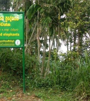 viaje de perle por el mundo elias por Sri Lanka 49 373x420 - Perlé, por avatares del destino, recorriendo la isla de Ceilán.