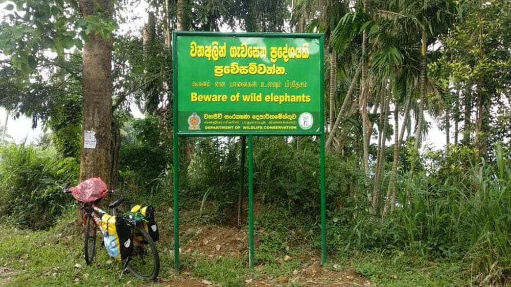 viaje de perle por el mundo elias por Sri Lanka 49 - Perlé, por avatares del destino, recorriendo la isla de Ceilán.
