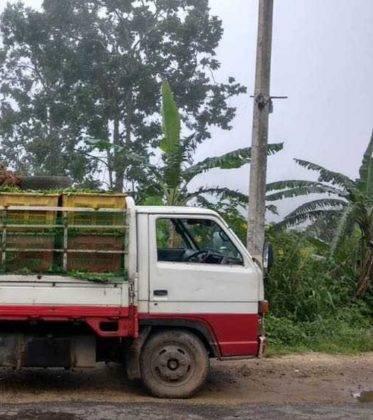 viaje de perle por el mundo elias por Sri Lanka 52 373x420 - Perlé, por avatares del destino, recorriendo la isla de Ceilán.