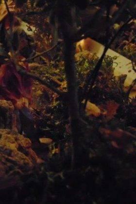 IV muestra de belenes navidad herencia 21 280x420 - Fotografías de la IV Muestra de Belenes de Herencia