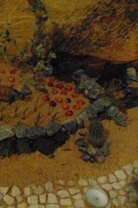 IV muestra de belenes navidad herencia 46 280x420 - Fotografías de la IV Muestra de Belenes de Herencia