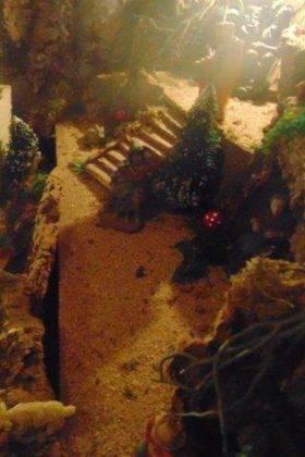IV muestra de belenes navidad herencia 5 280x420 - Fotografías de la IV Muestra de Belenes de Herencia