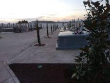 cipreses cementerio herencia 226x170 - Nueva iluminación en el paseo del cementerio de Herencia