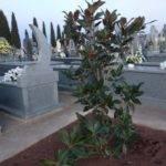 Nueva iluminación en el paseo del cementerio de Herencia 1