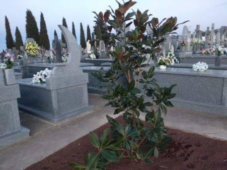 magnolios cementerio herencia 457x343 - Nueva iluminación en el paseo del cementerio de Herencia