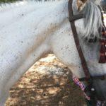 Herencia acoge la final de la Tercera Liga Social de Equitación 40
