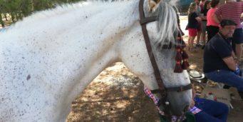 Final tercera lica social equitación de campo23