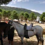 Herencia acoge la final de la Tercera Liga Social de Equitación 21
