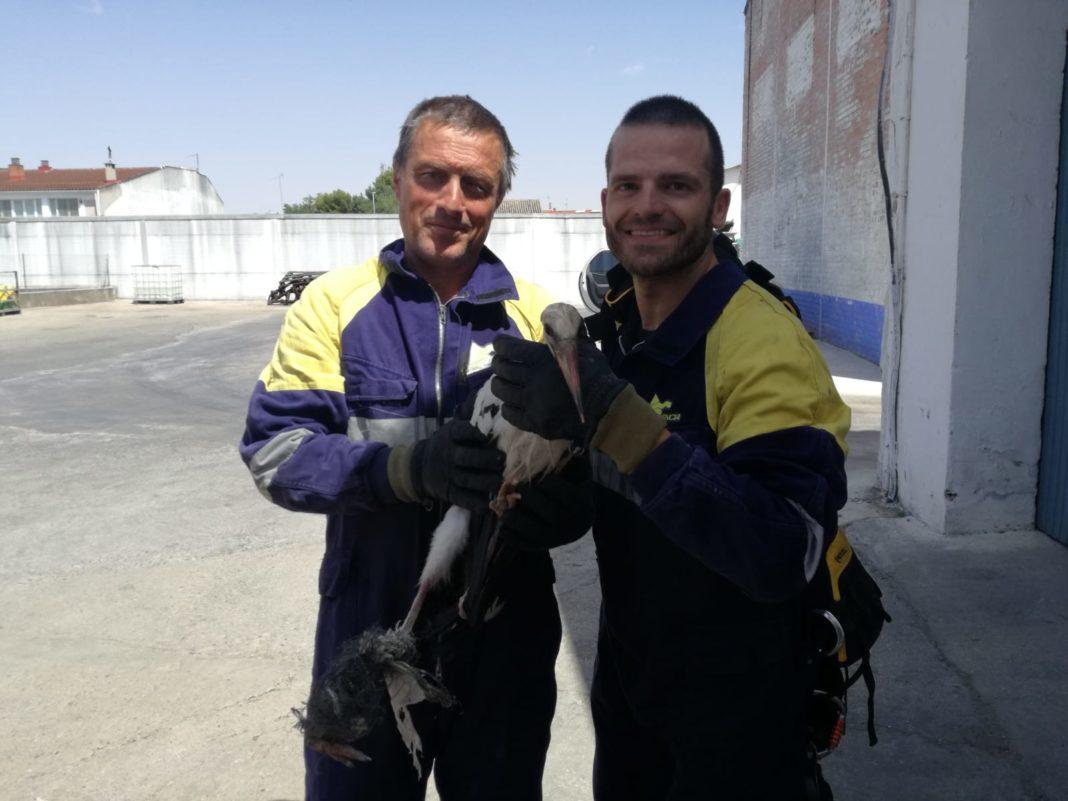 rescate cigüeña 1068x801 - Los bomberos rescatan una cigüeña en Herencia que finalmente no logró sobrevivir a sus heridas