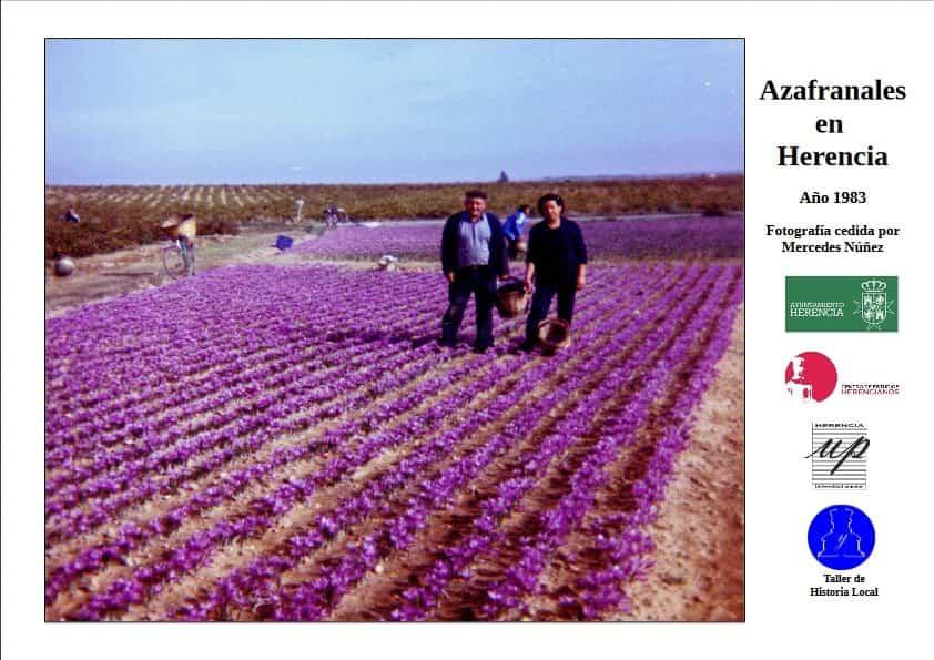 Azafranales en Herencia - La Fototeca Abierta nos trae una bonita imagen de los azafranales en Herencia