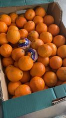 donaci%C3%B3n de la huerta de Herencia11 132x235 - Hortelanos de Herencia donan productos de sus huertas para alimentar a los sanitarios del hospital Mancha-Centro