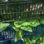 Hortelanos de Herencia donan productos de sus huertas para alimentar a los sanitarios del hospital Mancha-Centro 13