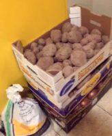 donaci%C3%B3n de la huerta de Herencia5 164x199 - Hortelanos de Herencia donan productos de sus huertas para alimentar a los sanitarios del hospital Mancha-Centro