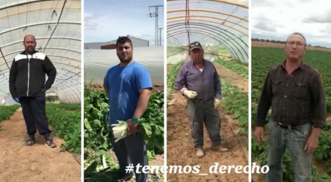 Un grupo de hortelanos de Herencia lanzan un vídeo para pedir reapertura de los mercadillos 1
