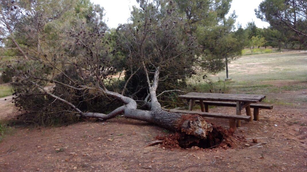 arbol caido la pedriza herencia 1068x601 - Árbol caído en los pozos del agua y labores de mantenimiento