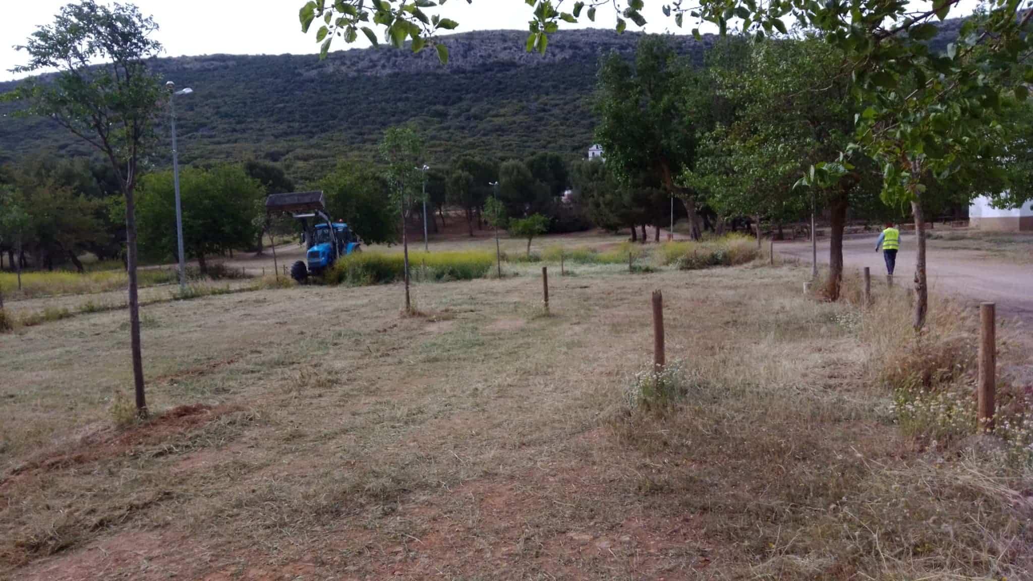 Árbol caído en los pozos del agua y labores de mantenimiento 3
