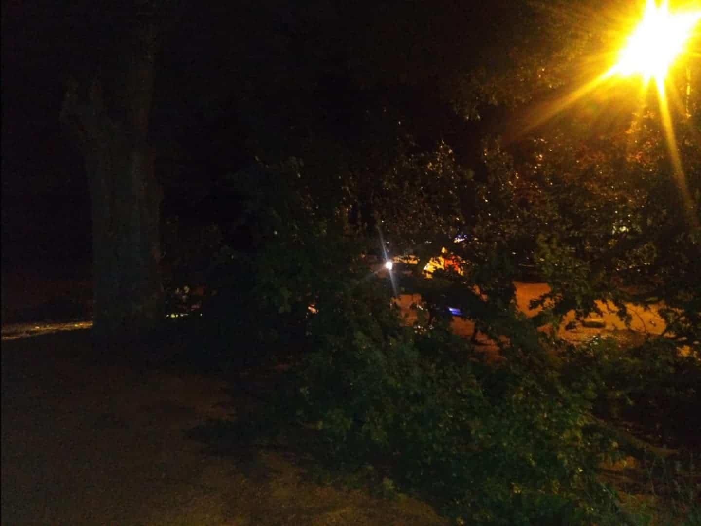 proteccion civil herencia ramas arboles caidas 3 - Ramas caídas en Herencia por la alerta naranja meteorológica