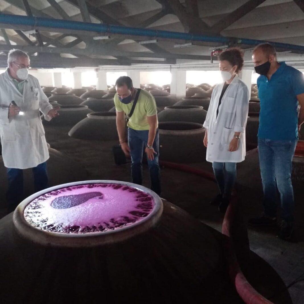 bodegas san jose herencia cubas fermentacion 1068x1068 - Herencia comienza una vendimia atípica con la recogida en cubos individuales