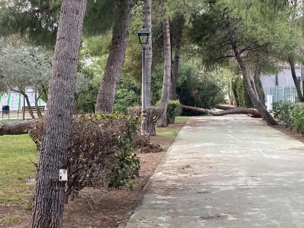 Árboles caídos en el Parque Municipal por el mal tiempo 5