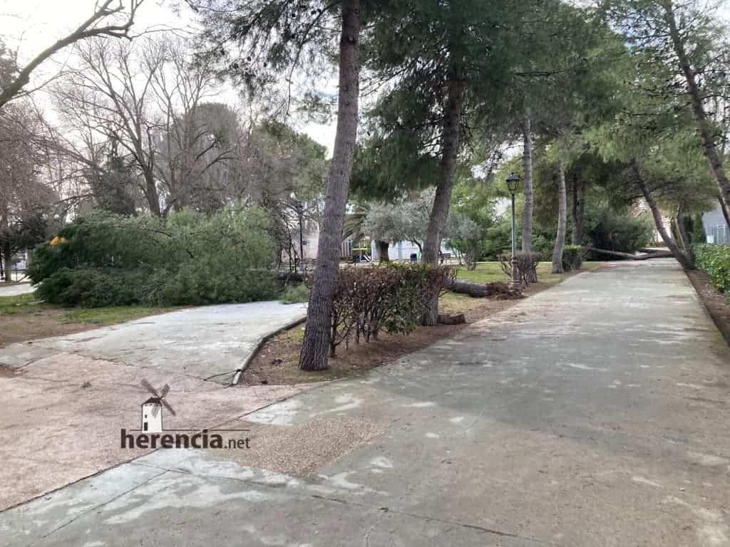Árboles caídos en el Parque Municipal por el mal tiempo 6