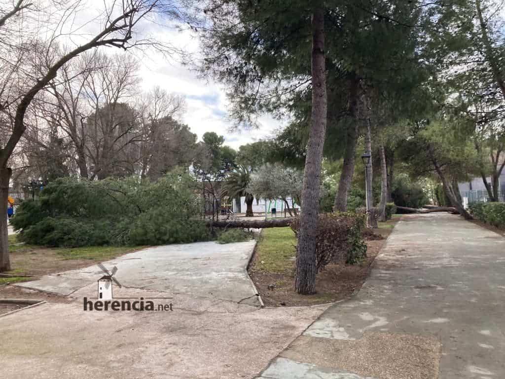 Árboles caídos en el Parque Municipal por el mal tiempo 7