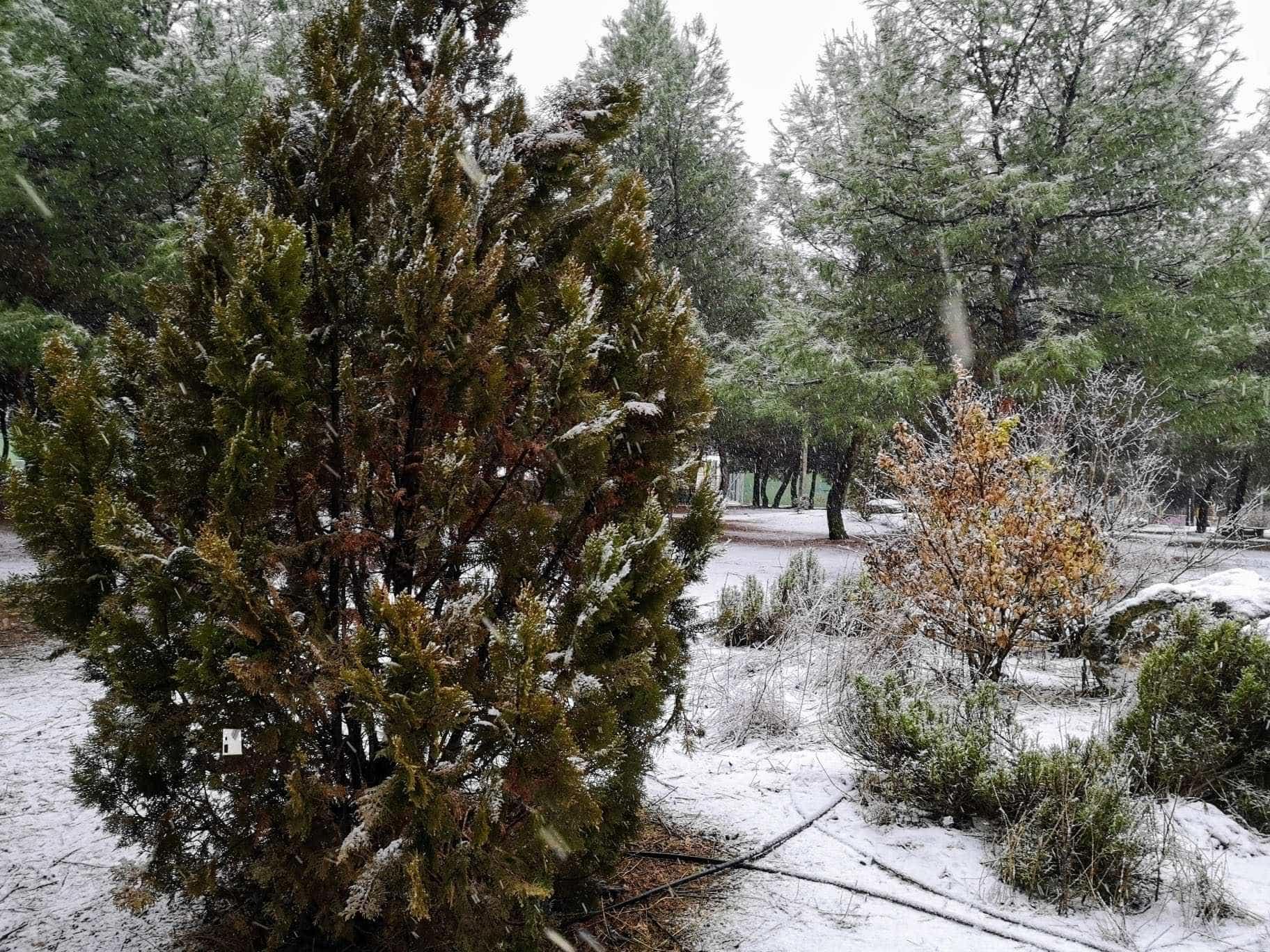 Las nevadas llegan Herencia y a toda Castilla-La Mancha (actualizado) 114