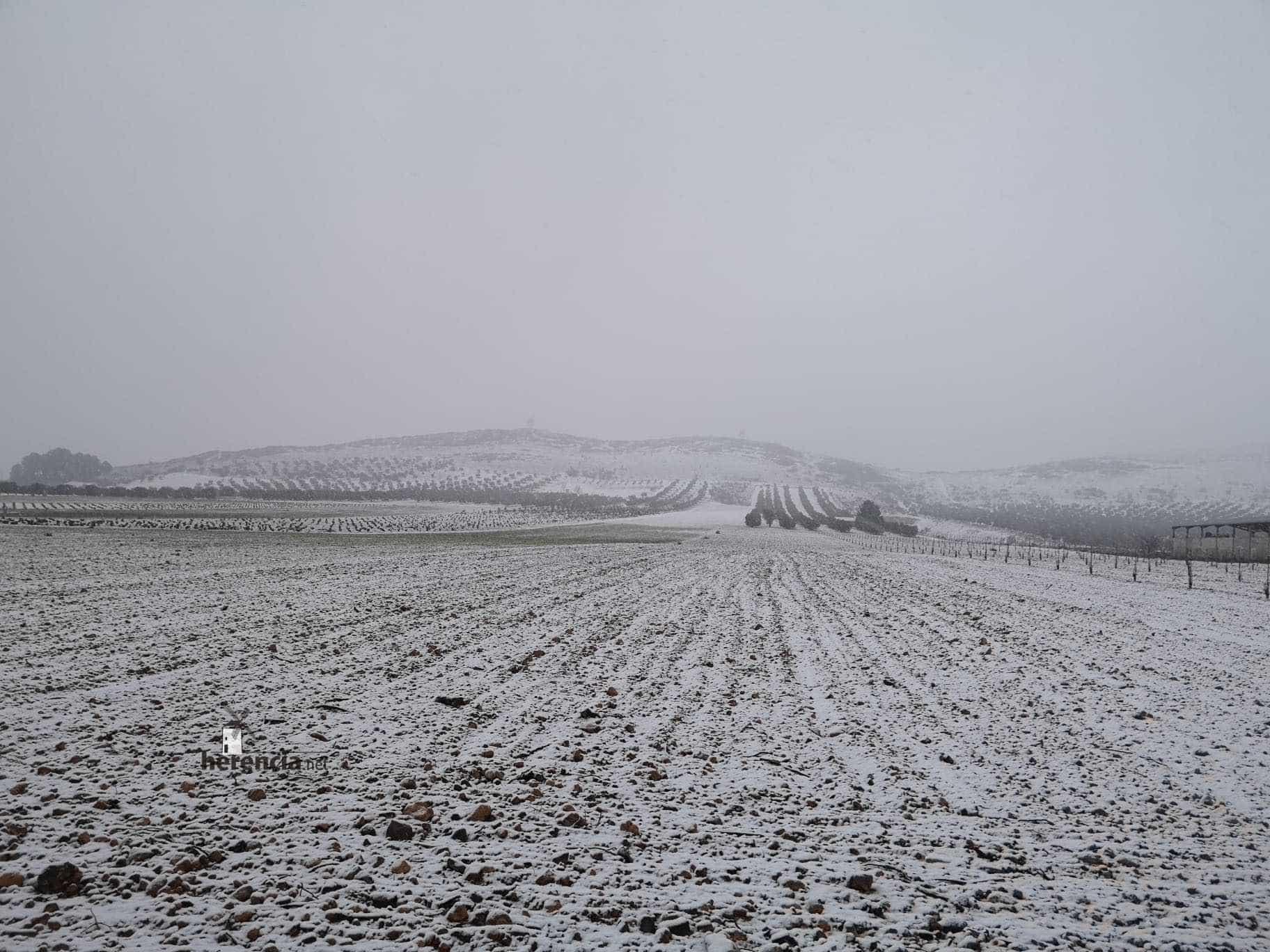 Las nevadas llegan Herencia y a toda Castilla-La Mancha (actualizado) 107