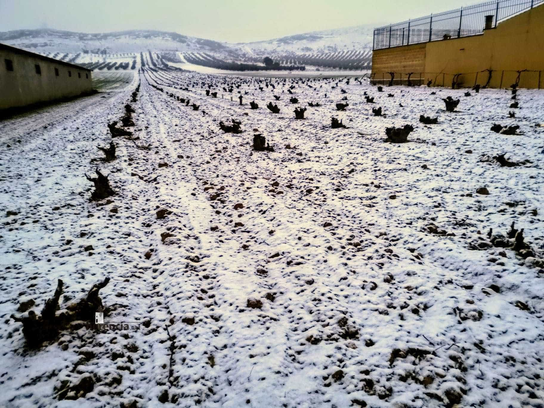 Las nevadas llegan Herencia y a toda Castilla-La Mancha (actualizado) 108