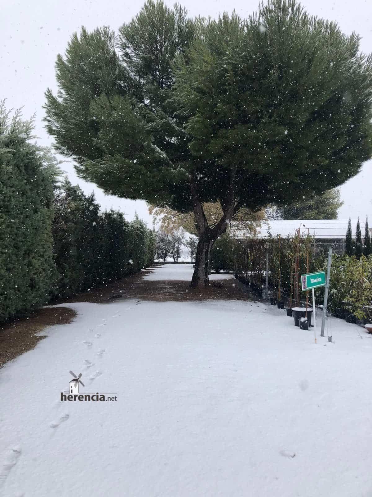 Las nevadas llegan Herencia y a toda Castilla-La Mancha (actualizado) 118