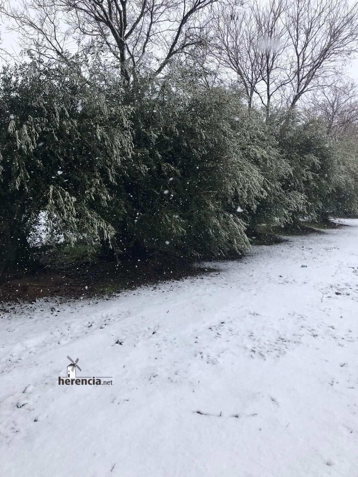 Las nevadas llegan Herencia y a toda Castilla-La Mancha (actualizado) 122
