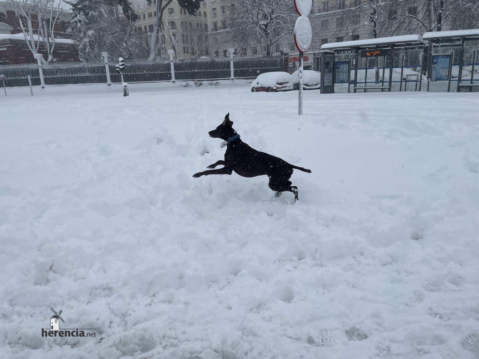 Más fotografías de las nieves de 2021 en Herencia 170