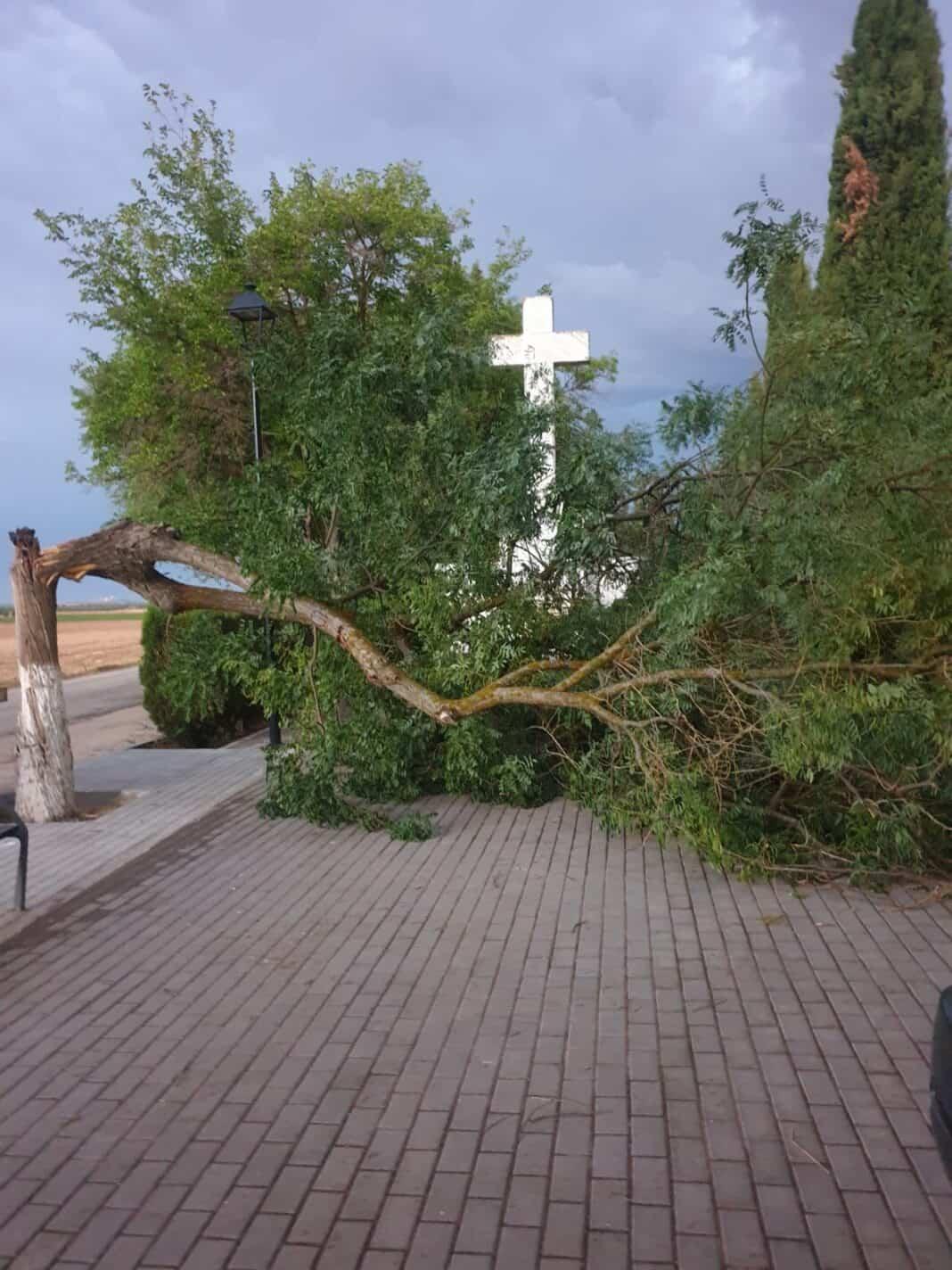 Nueva caída de árboles por las tormentas de verano en Herencia 1