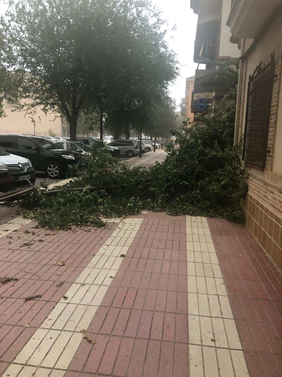 Una tormenta con fuertes rachas de viento provocaron la caída de árboles en Herencia 3